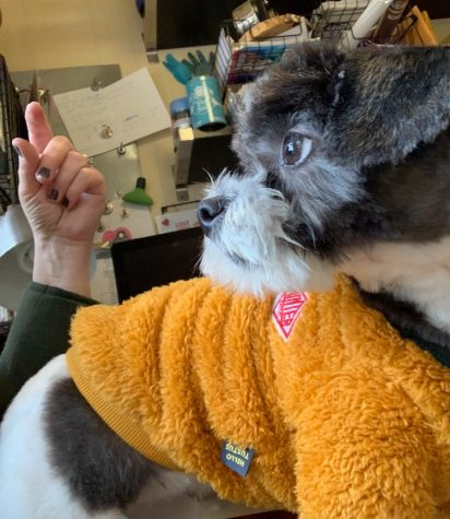 """Pawsitivity"" aims to alleviate stress"